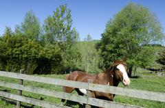 Horse in a paddock Stock Photos
