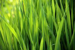 Close-up of lush green grass Stock Photos