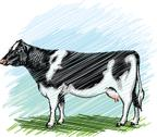 Stock Illustration of holstein cow illustration