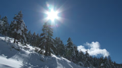 Colle De St Michel Bright Sun Over Pines Stock Footage