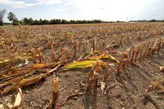 Dry field Stock Photos
