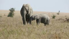 Elephant familiy eating in Serengeti Stock Footage