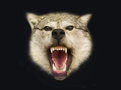 Pohjois susi Kuvituskuvat