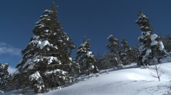 Colle De St Michel Short Pan Snowy pines Stock Footage