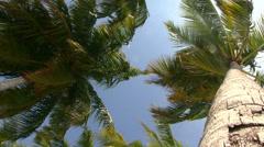 Maldives - Palm tree on a beach Stock Footage