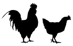 Rooster and hen Stock Illustration