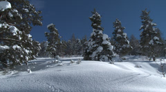 Colle De St Michel Pan of Snow Laden pines Stock Footage