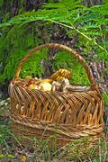mushrooms in a basket. - stock photo