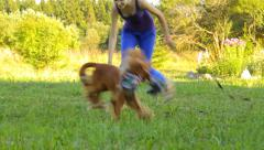 Girl and the best friend dog playing in the park with toy Stock Footage
