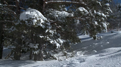 Colle De St Michel Snow Laden Pine Branch Stock Footage