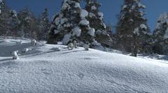 Colle De St Michel Tilt of Snow Laden Pines Stock Footage