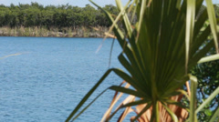 Palm fronds waving in the breeze by a pond - stock footage