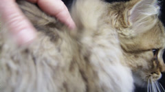A fluffy cat granted its body by someone's help in dark ground Stock Footage