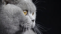 A gray color cat searches something in a dark room Stock Footage