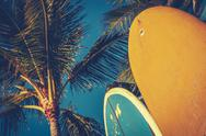 Stock Photo of vintage surfboards and palms