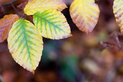Colorful background made of fallen autumn leaves Stock Photos