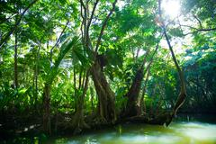 lush green tropical vegetation alongside water - stock photo