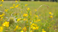 The meadow and yellow flowers close-up in nature Stock Footage