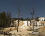 Stock Video Footage of Water flow and dead trees on travertine terraces of Mammoth Hot Springs