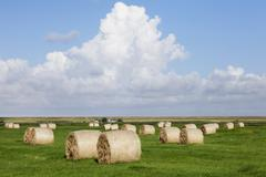 Hay bails on a meadow, eiderstedt peninsula, schleswig holstein, germany Stock Photos