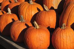 Pumpkins, the hamptons, long island, new york state, united states of america Stock Photos