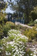 Abbey gardens, tresco, isles of scilly, cornwall, united kingdom, europe Stock Photos