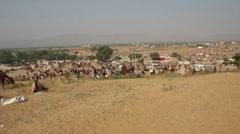 Camels during Pushkar Camel Fair Stock Footage