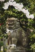 A mythical lion statue and cherry blossom in a temple in kyoto, honshu island Stock Photos