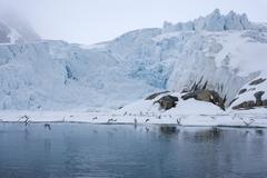 Gulls fly up in front of glacier, spitzsergen, svalbard, norway, scandinavia, Stock Photos