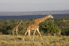 Kenia Kuvituskuvat