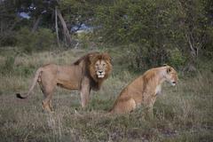 Kenya Stock Photos