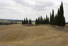Harvested barley field with cypress trees, tuscany, italy Stock Photos