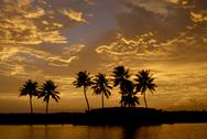 Stock Photo of sunset over the backwaters, alleppey, kerala, india, asia