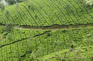 Stock Photo of tea gardens, devikulam, munnar, kerala, india, asia