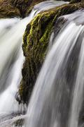 moss and water at redmire force near swinithwaite in wensleydale, yorkshire d - stock photo