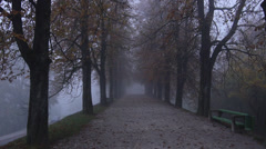 Stock Video Footage of AERIAL: Misty tree avenue