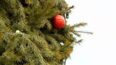 Xmas tree background Stock Footage