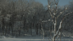 Snowy branch with trees in background Stock Footage