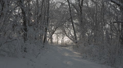 Snowy calm forest path Stock Footage