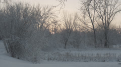 Snowy trees by frozen pond at sunset Stock Footage