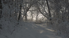Snowy path in forest Stock Footage