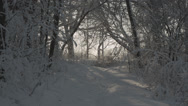 Stock Video Footage of Snowy path in forest
