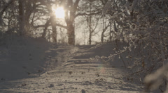 Snow blowing off trees at sunset Stock Footage