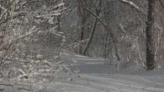 Calm snowy path in woods Stock Footage