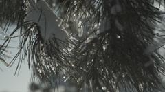 Snowy pine branch waving gently in breeze Stock Footage