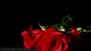 Stock Video Footage of 0581 Roses Falling in Slow Motion