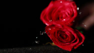 Stock Video Footage of 0578 Roses Falling in Slow Motion