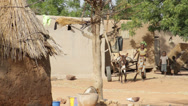 Stock Video Footage of Africa village donkey and cart, boy runs
