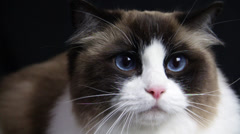 The Stunned Look of a Cute Cat at Something Stock Footage