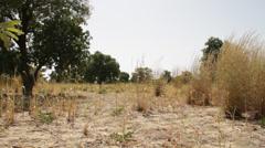 Africa - farmer cuts tall grass - Mali Stock Footage
